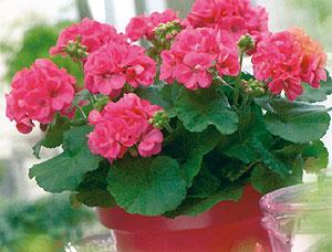 Empresas de flores plantas arboles y viveros tattoo for Empresas de jardineria